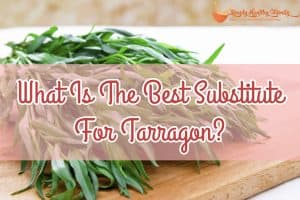 What Is The Best Substitute For Tarragon