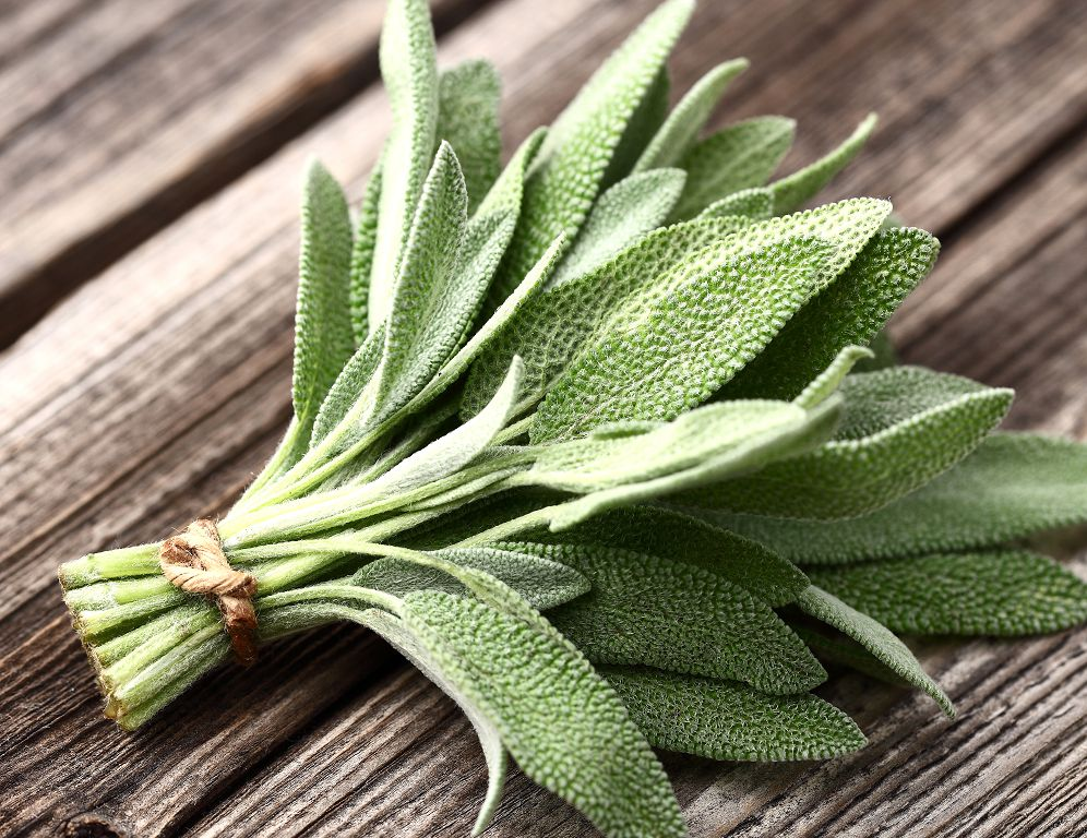 The 5 Best Substitutes For Sage