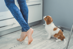 Puppy on the kitchen floor near the feet of a girl