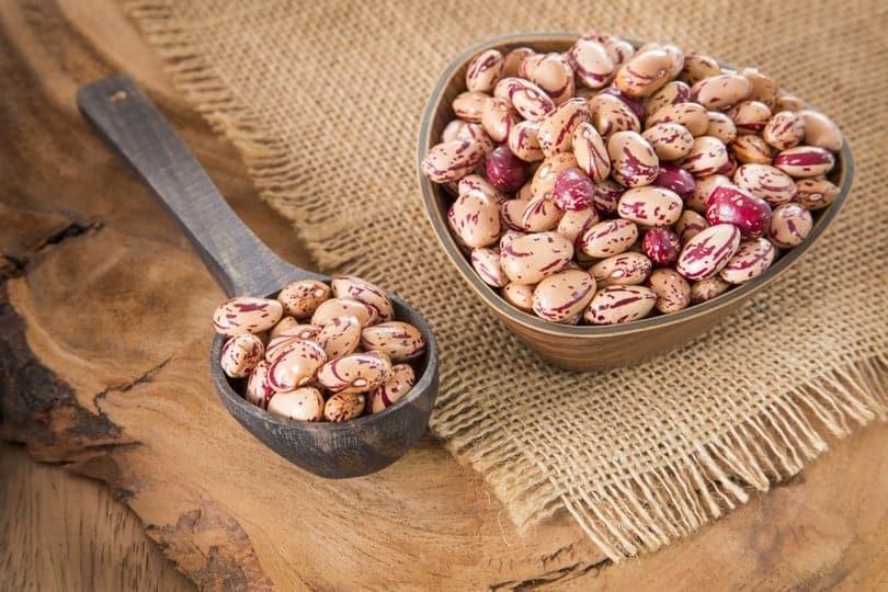 Pinto Bean Facts And Delicious Vegan Recipes