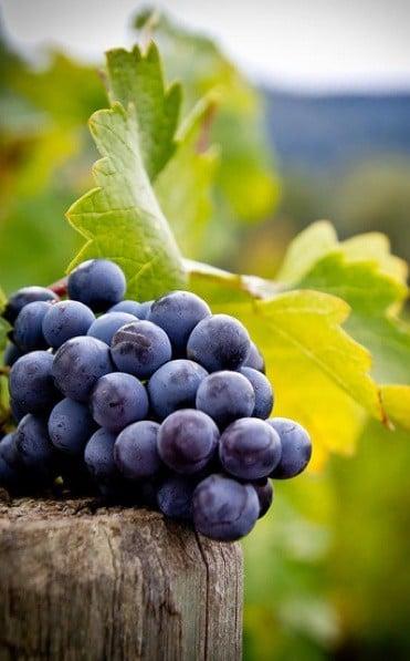 Grape on the wood