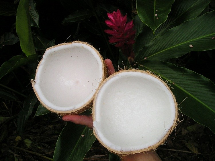 Slices of Coconut