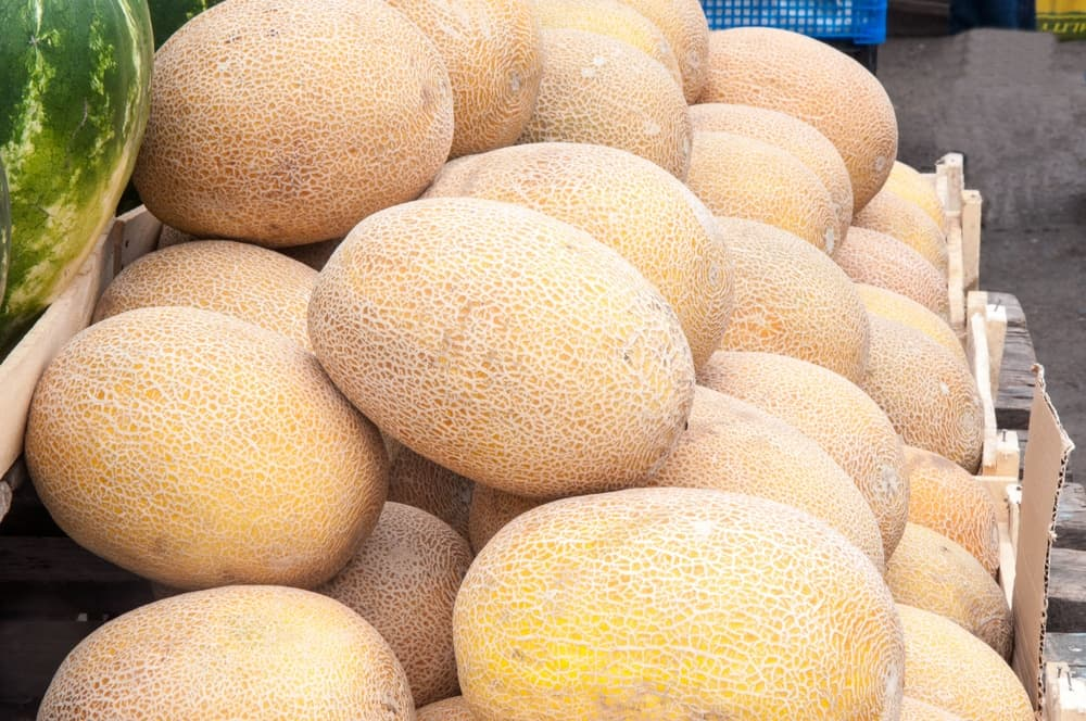 Honeydew Melon on the market