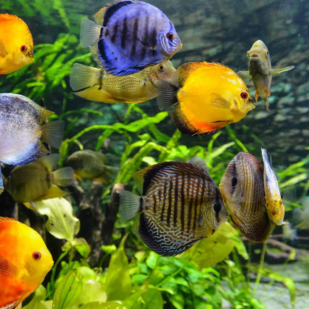 Does Watching Fish Relieve Stress?