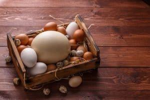What Do Ostrich Eggs Taste Like