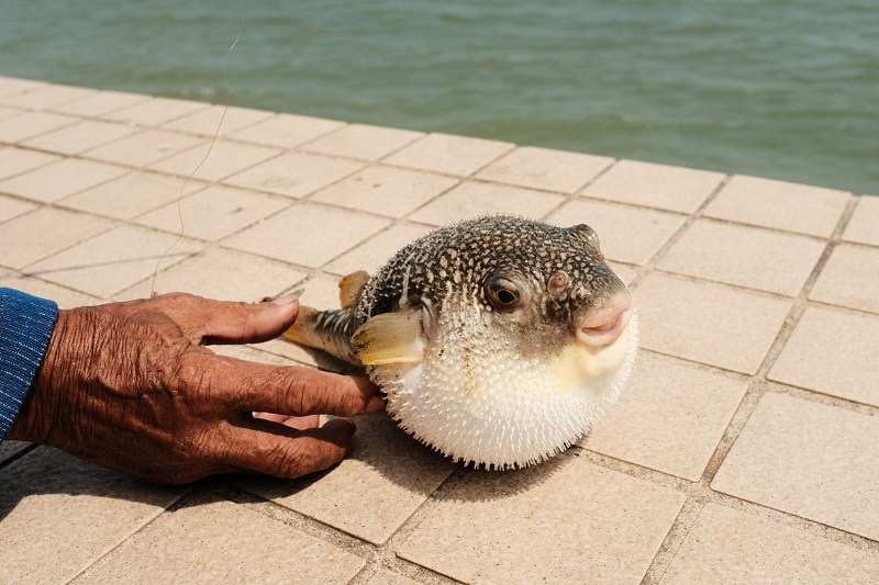 What Does Fugu Taste Like