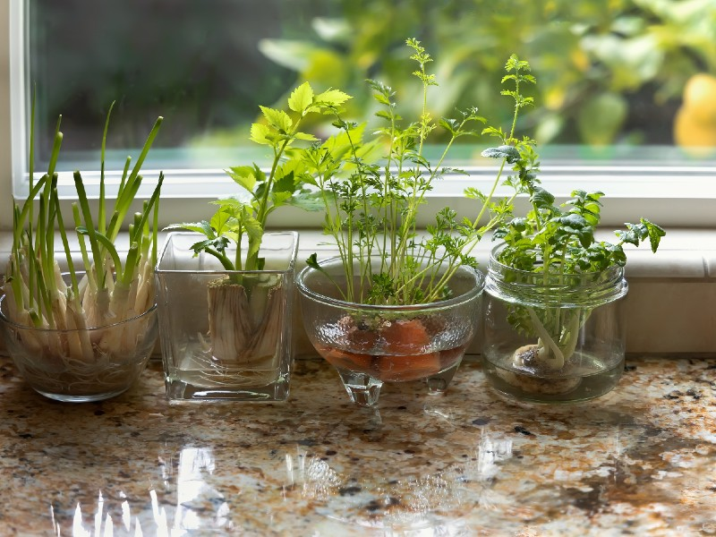 How Often Do You Water Herbs